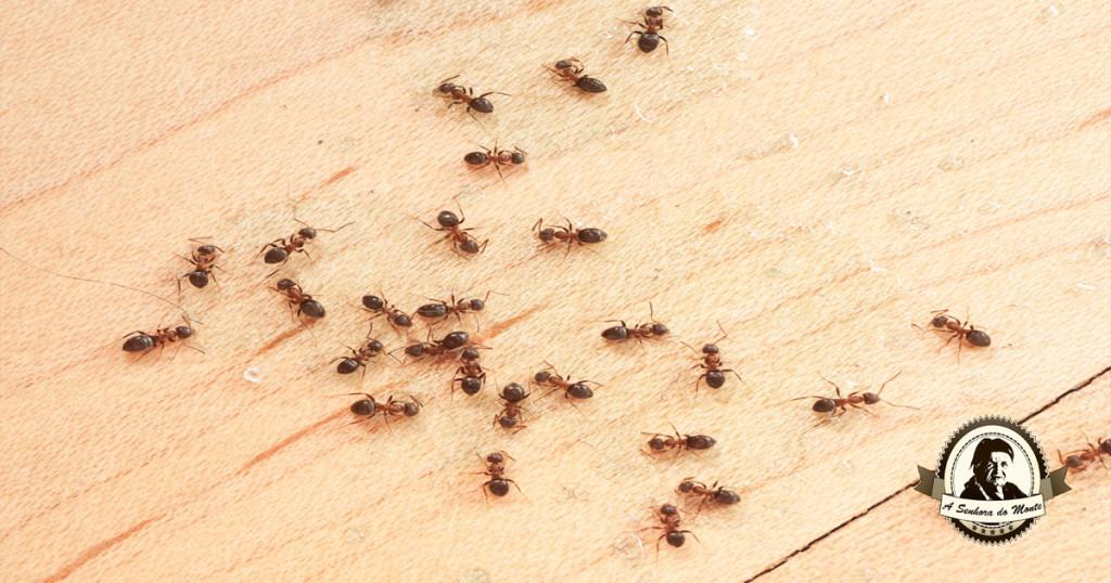 Repelentes naturais para afastar formigas