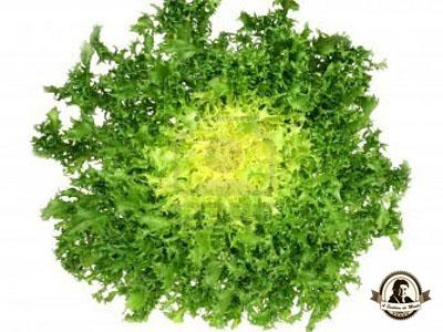 Salada de chicória