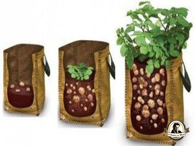 Como fazer batatas num saco