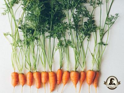 Como plantar cenouras