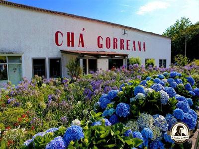 Fábrica de chá Gorreana - Açores
