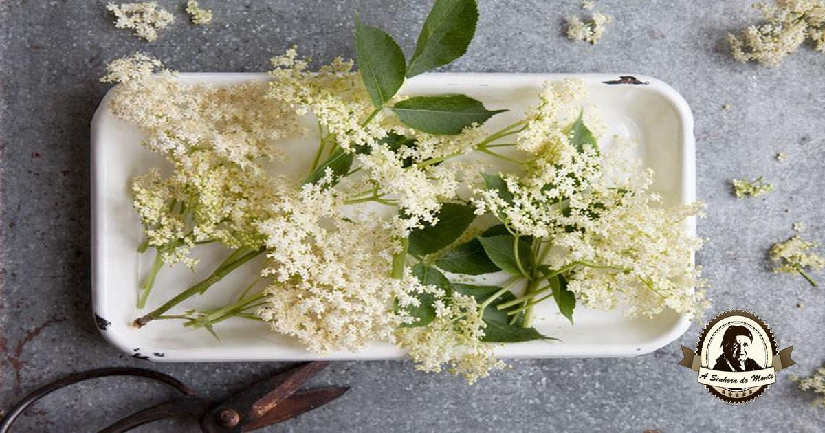 Sabia que as flores de sabugueiro são comestíveis