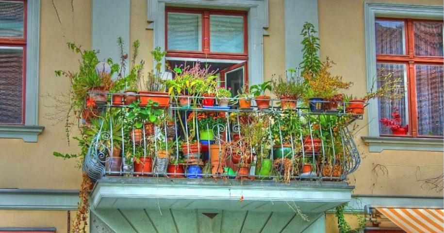 Frutas e vegetais que pode plantar em vasos