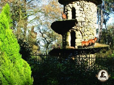 Cabras da Quinta da Aveleda
