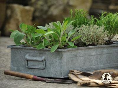 Como plantar aromáticas