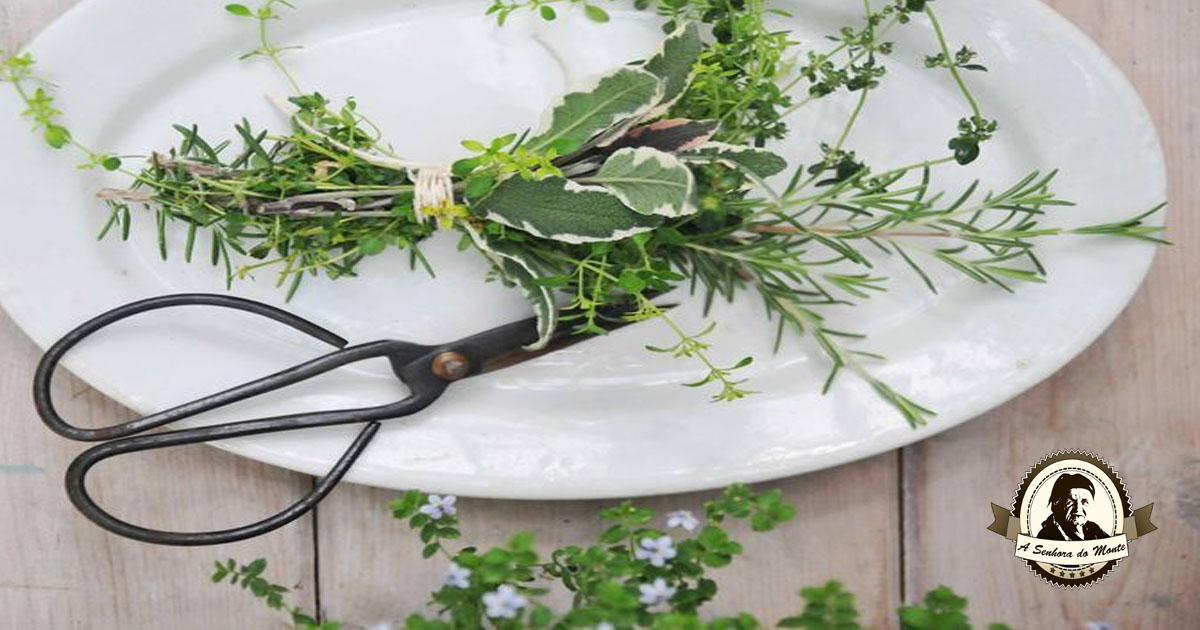 8 Temperos que deve plantar na sua horta