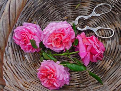 Pétalas de rosa
