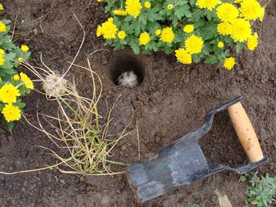 Utensílios que precisa para tratar da sua horta