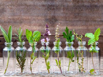 Aromáticas que podem ser cultivadas o ano inteiro só com água