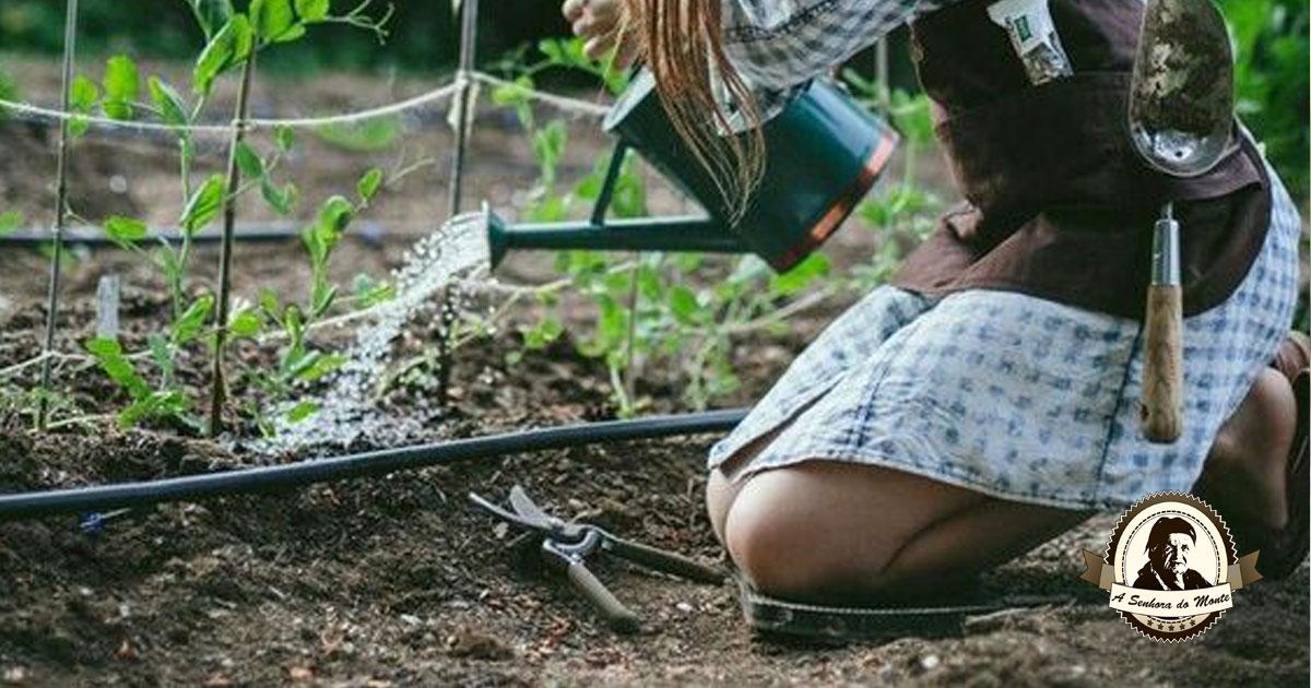 Como testar o pH do solo com ingredientes da sua cozinha
