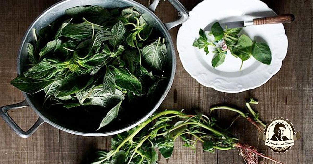 Sabia que as folhas de amaranto são comestíveis?