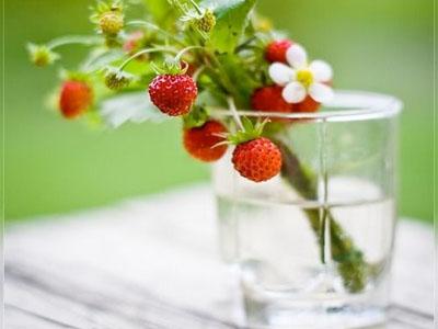 Morangos silvestres - Conhece esta variedade de morangos em miniatura?