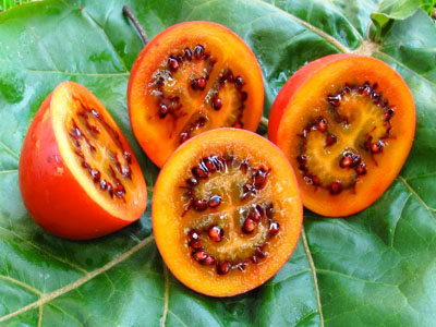 Tamarilho - Conheça este fruto enigmático
