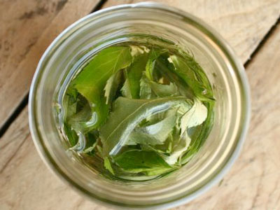 Aprenda a fazer uma pomada caseira de folhas de sabugueiro