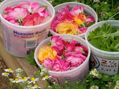 Como colher e secar flores e ervas do seu jardim