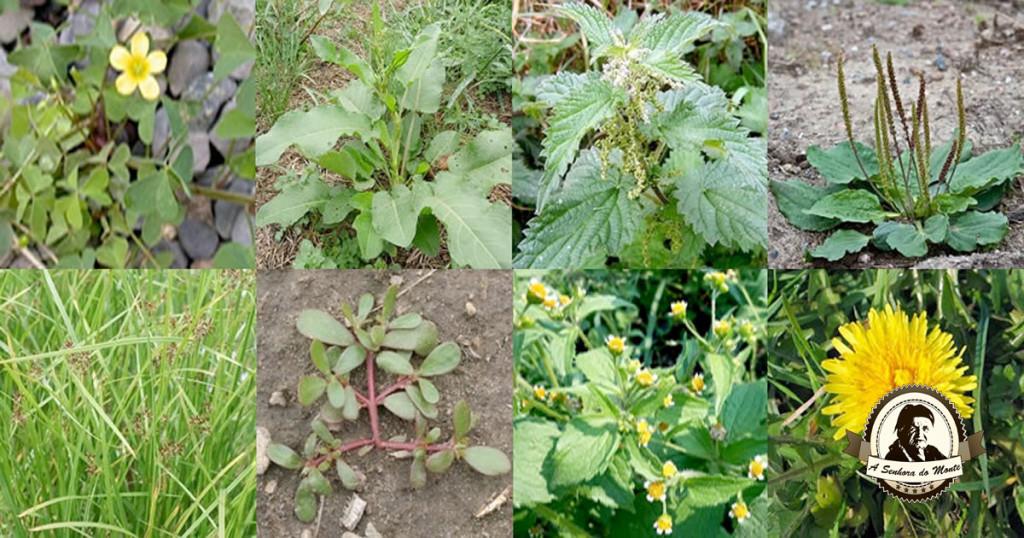 Sabe o que são plantas indicadoras?