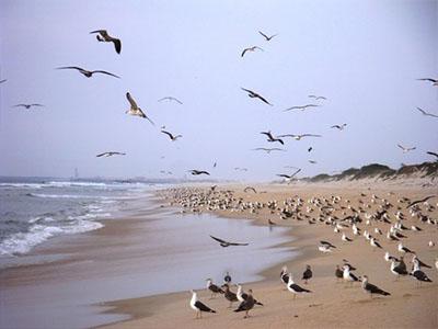 Como prever o clima através das aves