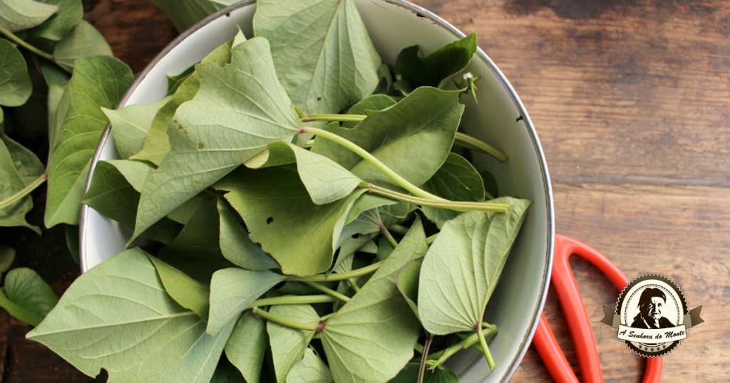 Sabia que as folhas de batata doce são comestíveis?