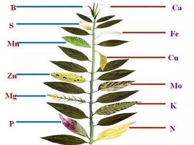 Saiba quais os nutrientes que fazem falta às suas plantas - Macronutrientes