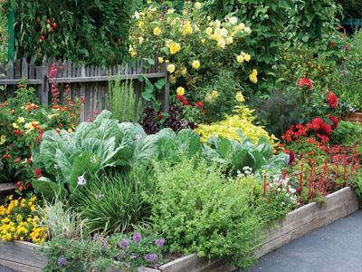 Sabe o que são plantas companheiras ou consociação de plantas?