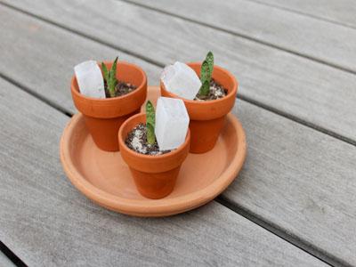 Aprenda a propagar pequenas suculentas