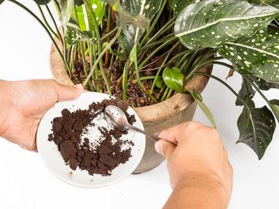 Adubo orgânico feito de borras de café