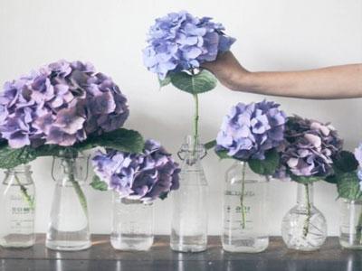 Aprenda a melhor melhor maneira para preservar hortênsias