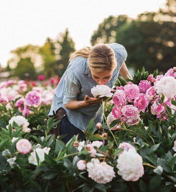 a plantar e a cuidar destas flores tão especiais - Peónias