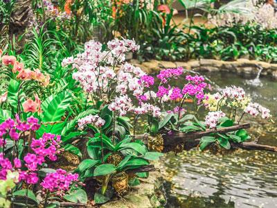 Aprenda o que fazer para que as suas orquídeas voltem a florir!