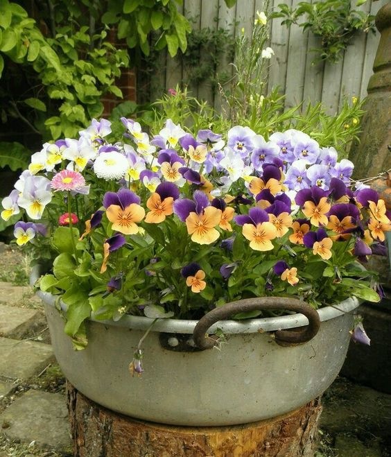 Calendário de flores de jardim