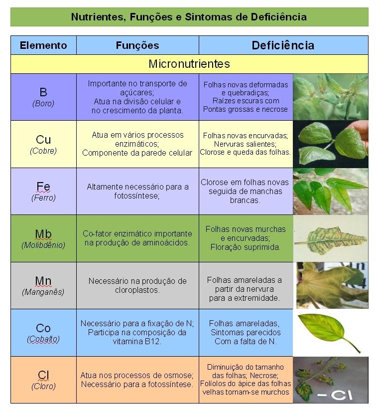 Saiba quais os nutrientes que fazem falta às suas plantas - Micronutrientes