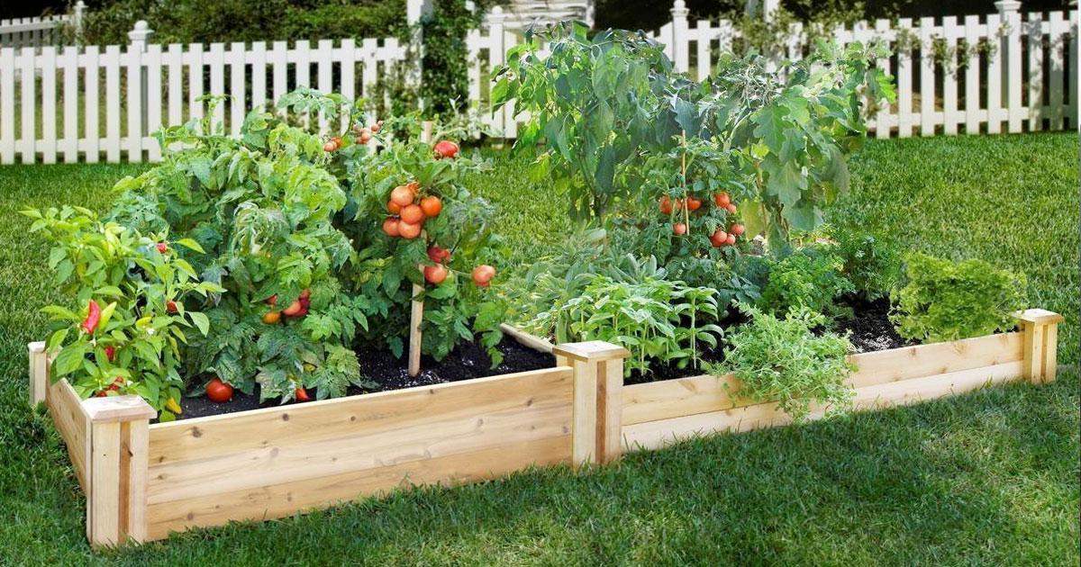 Aprenda a manter as suas plantas vivas e bonitas todo o ano