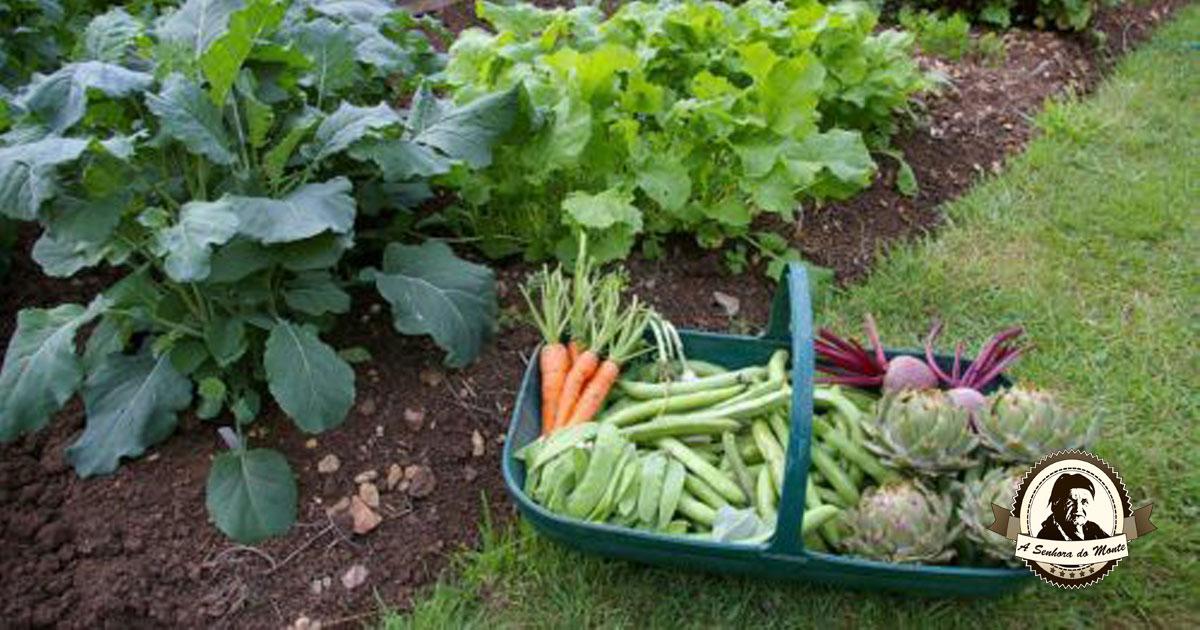 Aprenda quais são os vegetais que crescem à sombra