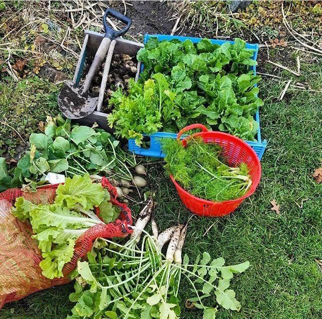 Vegetais que podem ser colhidos em menos de 2 meses!