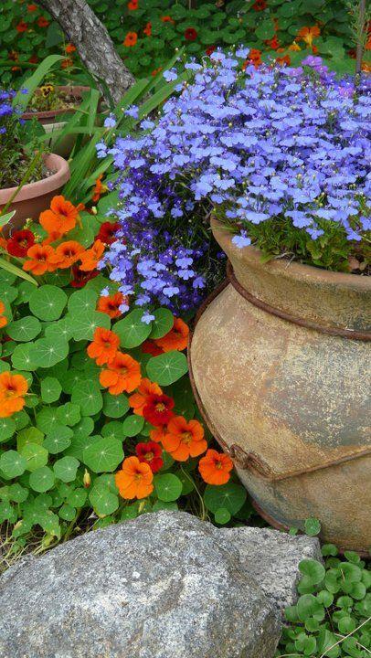 Plantas e flores úteis que deve plantar na sua horta