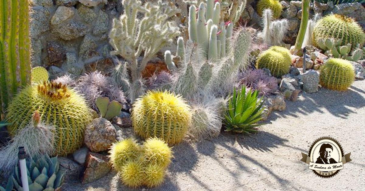 Sabe o que são cactos do deserto? Aprenda a cuidar destas plantas!