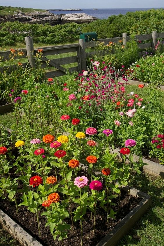 Relembre-se das plantas que os nossos avós usavam nos seus jardins!