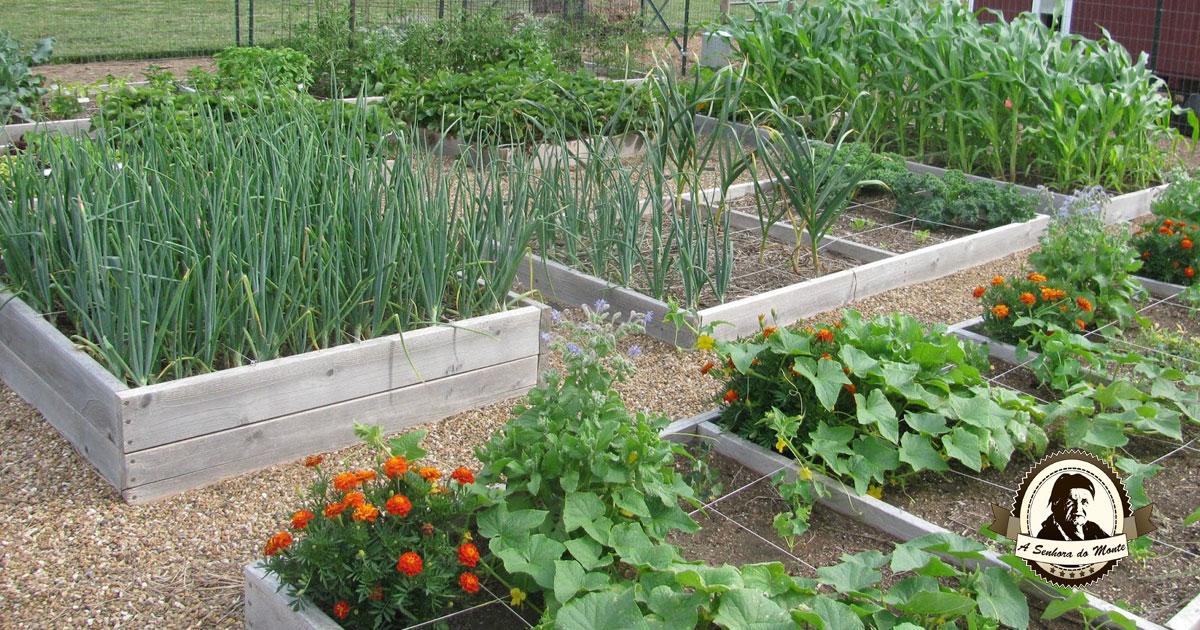 Aprenda que plantas são companheiras das cebolas