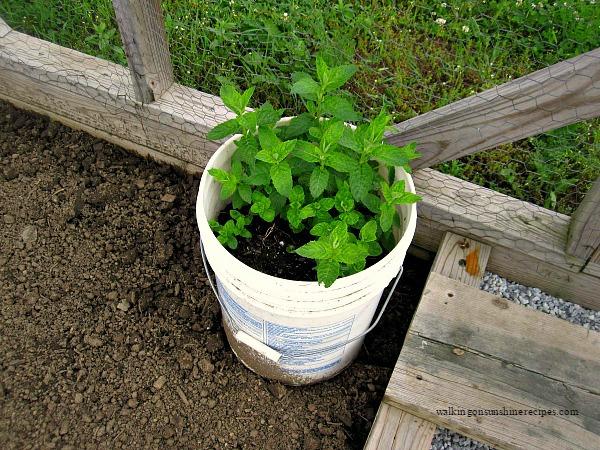 Aprenda a crescer hortelã sem que ela se propague pelo seu jardim