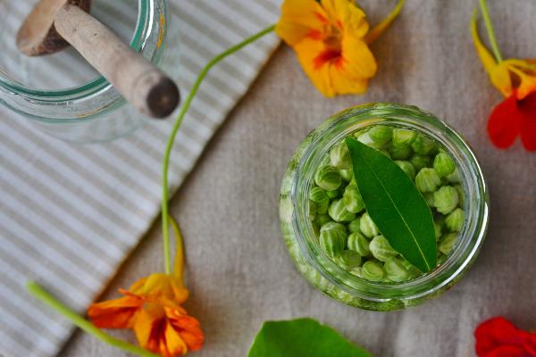 Sabia que pode fazer picles de sementes de capuchinhas?