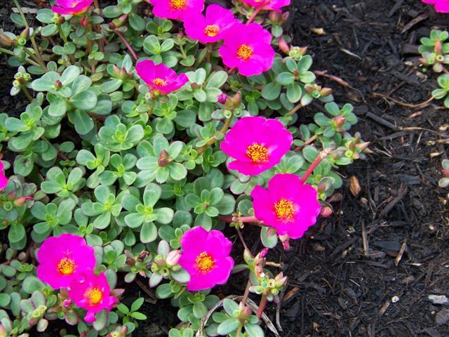 Conheça algumas plantas que crescem quase sem água