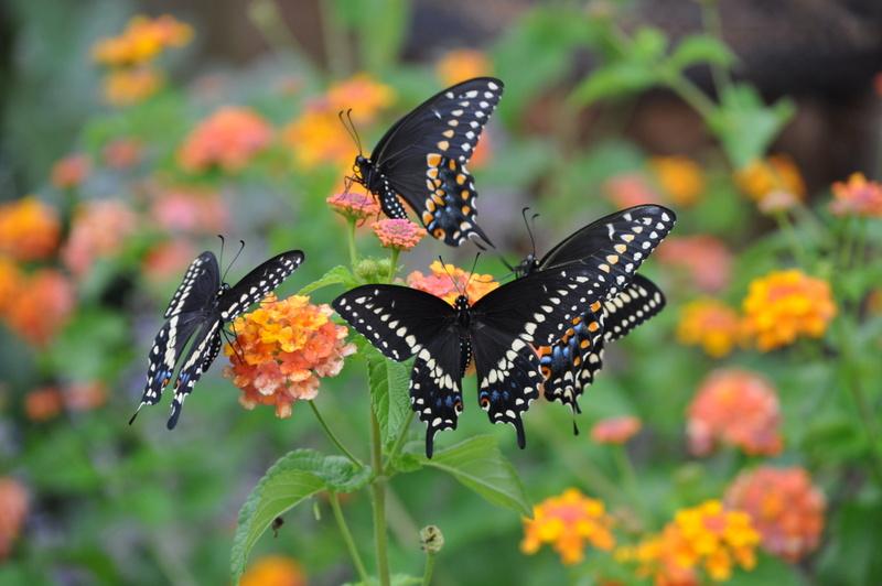 Existem plantas que atraem borboletas - saiba quais!