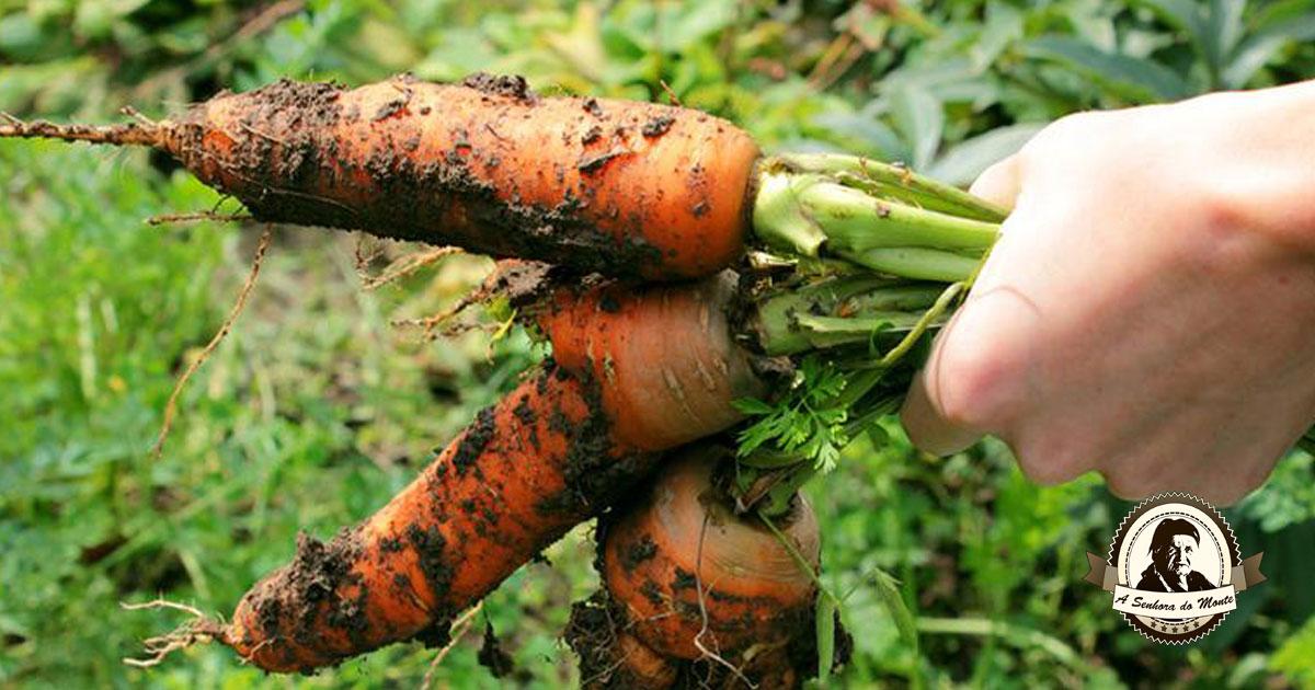 Aprenda algumas dicas essenciais para plantar cenouras