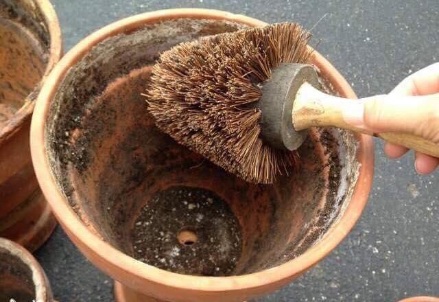 Limpar vasos de barro