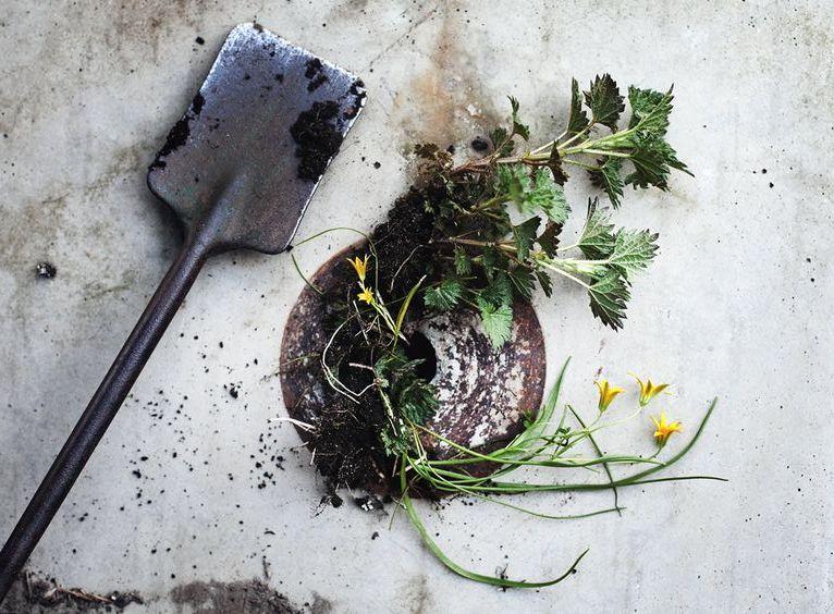 Conheça algumas plantas venenosas que poderá ter no seu jardim