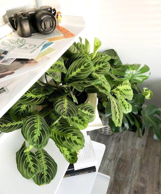 Plantas de interior que n o necessitam de muita luz for Plantas de interior lidl