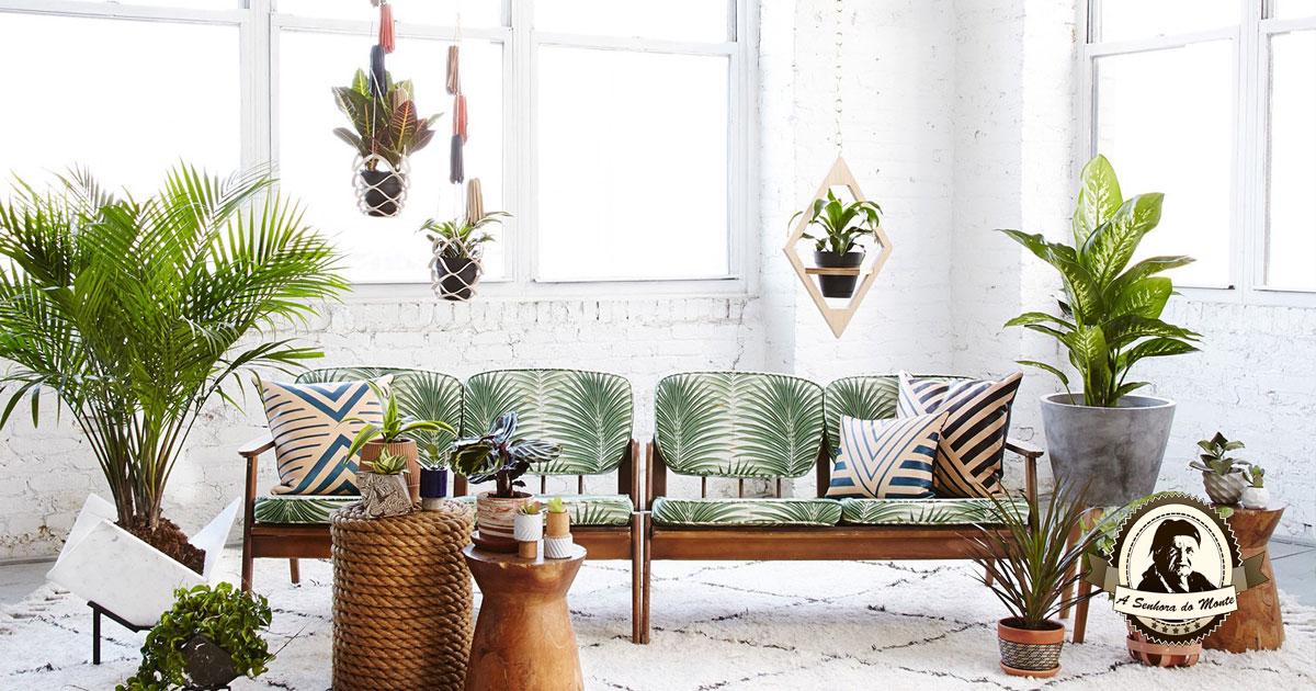 Como livrar as suas plantas de interior dos ataques dos pulgões!