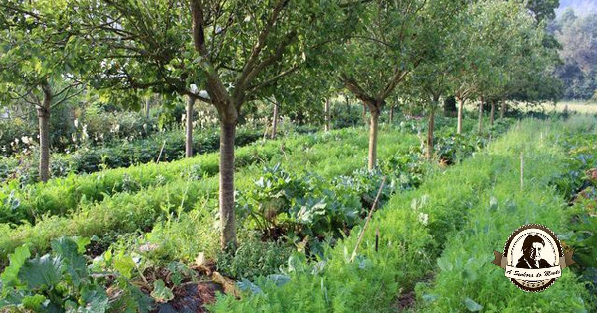 Melhore o crescimento das árvores de fruto com outras plantas!