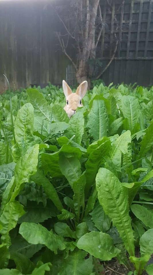 Saiba quais são os alimentos que os coelhos mais preferem!