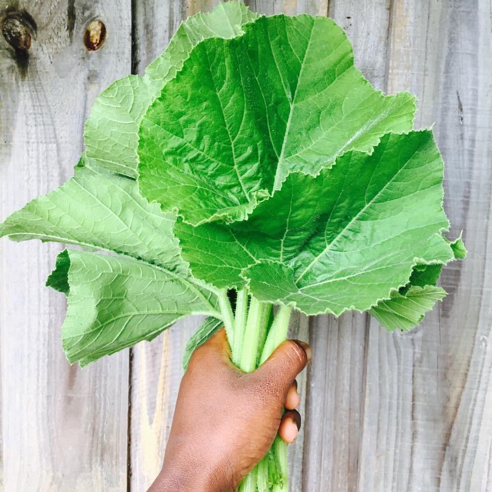 Sabia que as folhas de abóbora são comestíveis?